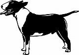 Bull Terrier 001
