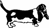 Basset Hound 002