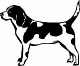 Beagle 002