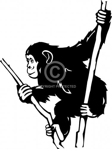 Chimpanzee 01