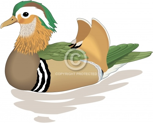 Duck 05