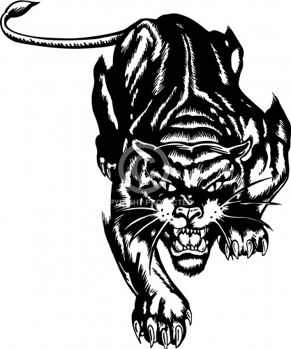 Cougar 02