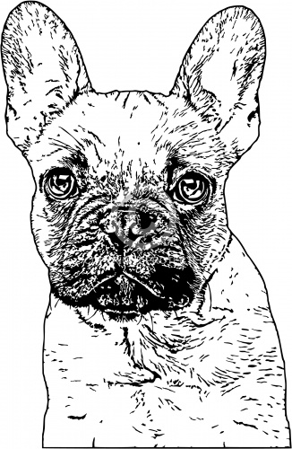 French Bulldog 01