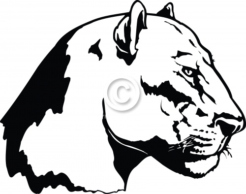 Lioness 03