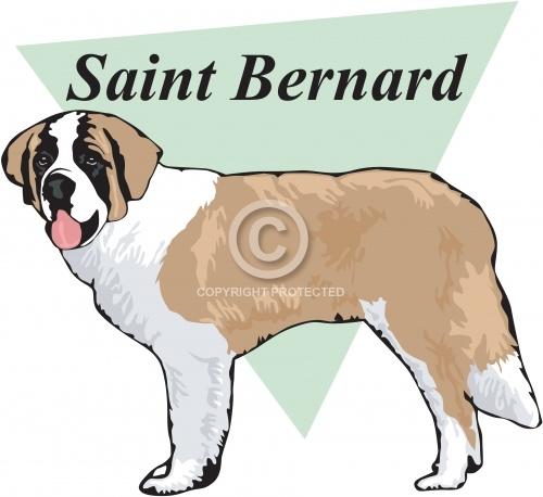 Saint Bernard 03
