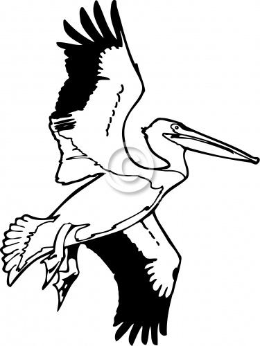 Pelican 03