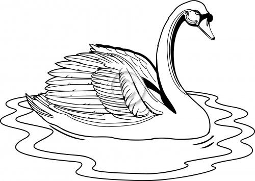 Swan 02