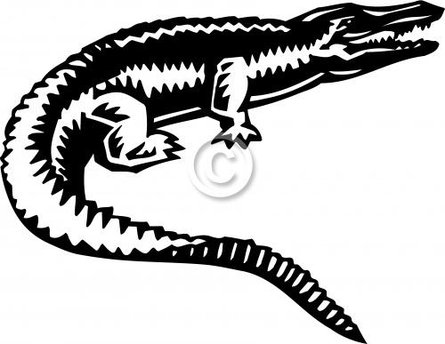 Alligator 01