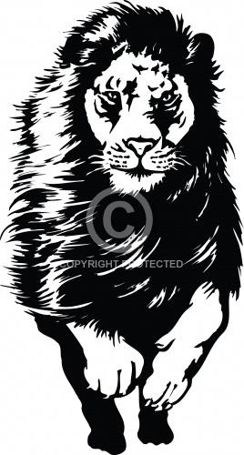 Lion 16