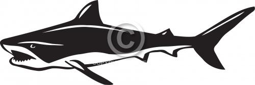 Shark 01