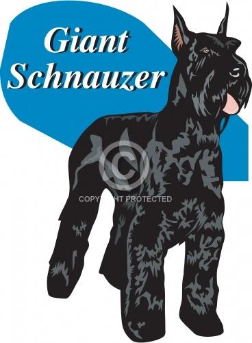 Schnauzer 02