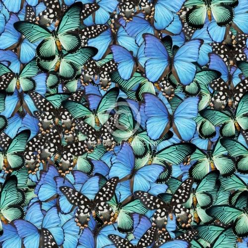 Butterflies 04