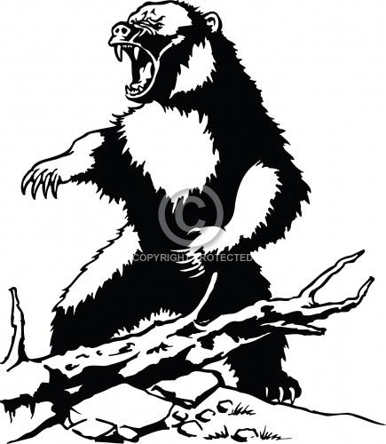 Bear 06