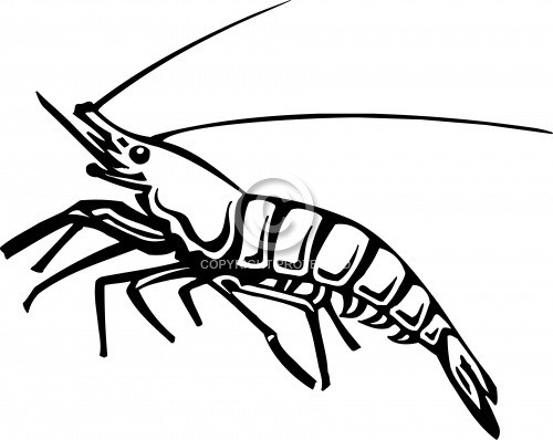 Shrimp 01