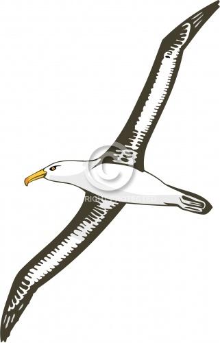 Albatross 02
