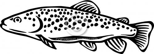 Trout 01