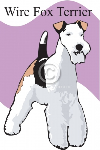 Wire Fox Terrier 01