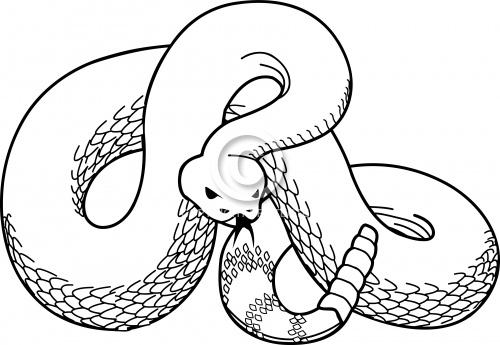 Snake 06