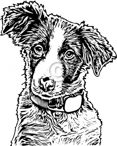 Dog 01