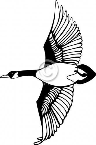 Goose 03