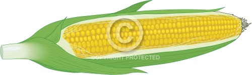 Corn on the Cob 01