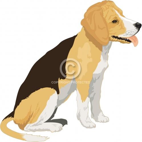 Beagle 05