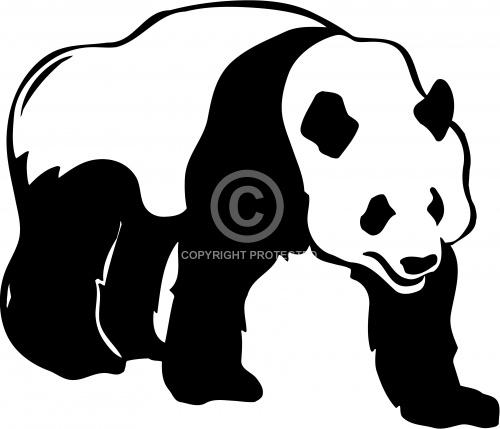 Panda Bear 01