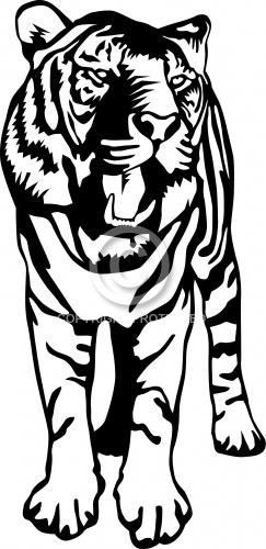 Tiger 04