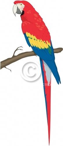 Macaw 02