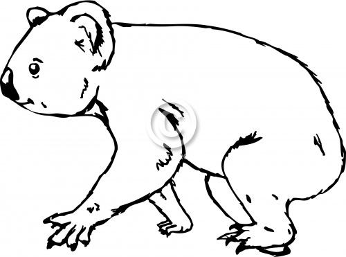 Koala 02