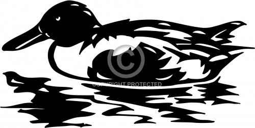 Duck 03