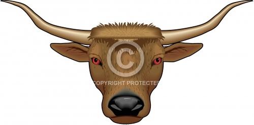 Bull 05