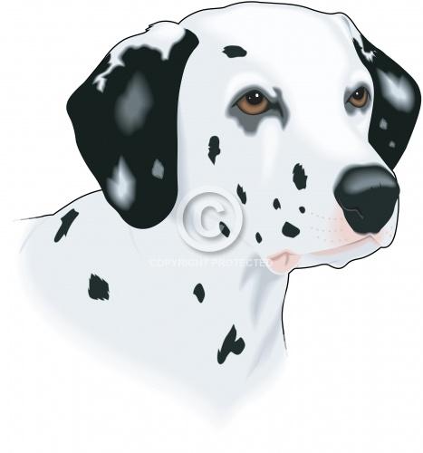 Dalmatian 03