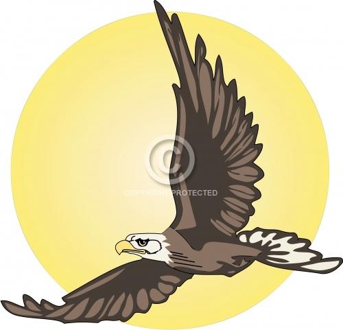 Eagle 11