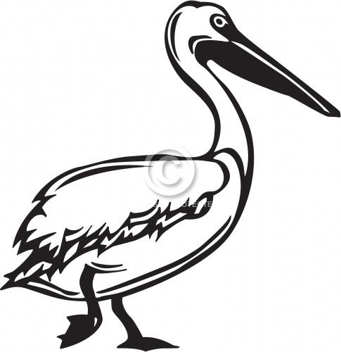 Pelican 01
