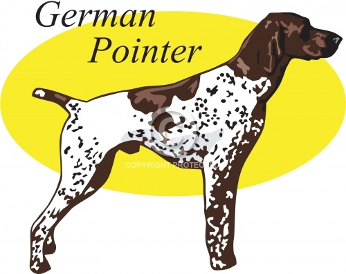 German Pointer 01