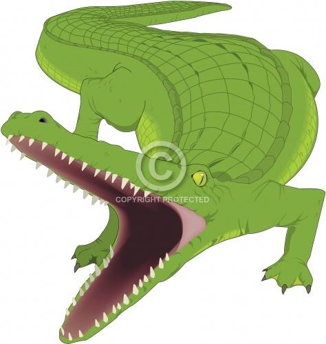 Alligator 03