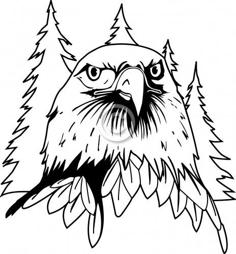 Eagle 03