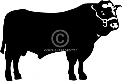 Bull 02