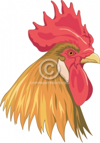 Rooster 04