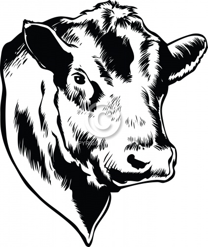 Bull 04