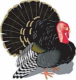 Turkey 03