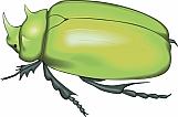 Beetle 04