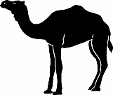 Camel 01