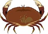 Crab 05