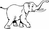 Elephant 02