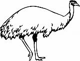 Emu 01