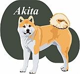 Akita 02