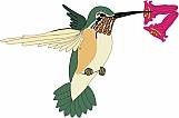 Hummingbird 04