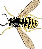 Wasp 04